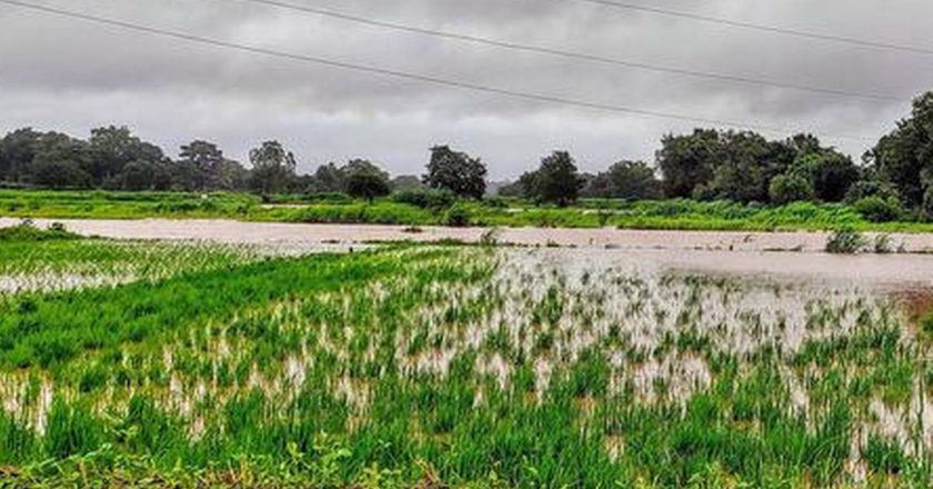 Monsoon expected to be normal in August-Sept after prolonged dry spell